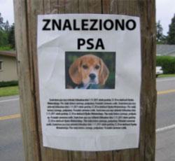 zaginiony-pies